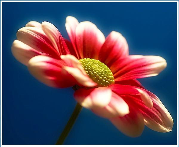 Difused Flower by kidda