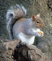squirels free food