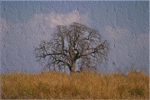 textured landscape by saramalik
