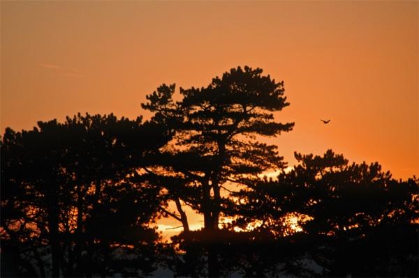 Sunset by mttmwilson