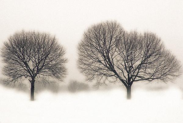 Song of a snowfall by kjenn