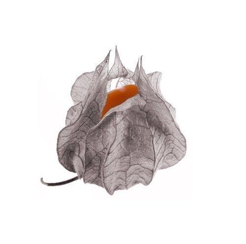 Strange Fruit by Origami_Owl