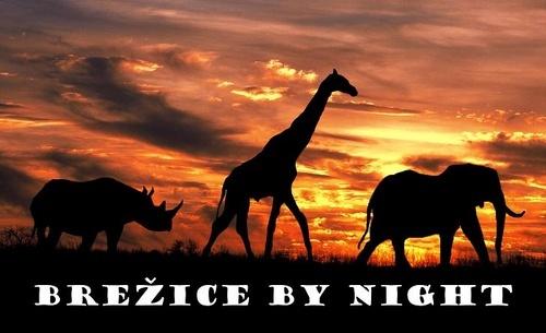 Brezice by night by GregorP