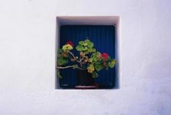 Plants 1 by kombizz