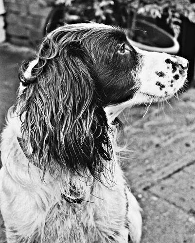 Rufus by emmat