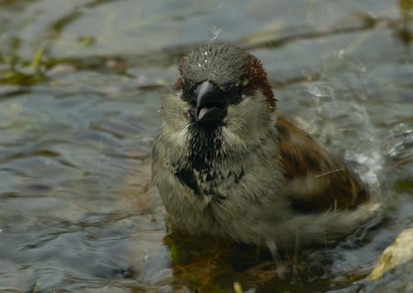 Bath Time by davefolky