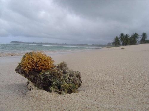 Gwada Beach by tiben