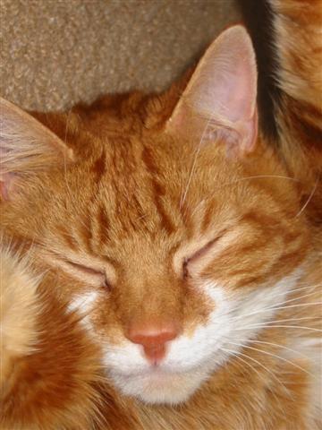 Ginger by catlover27