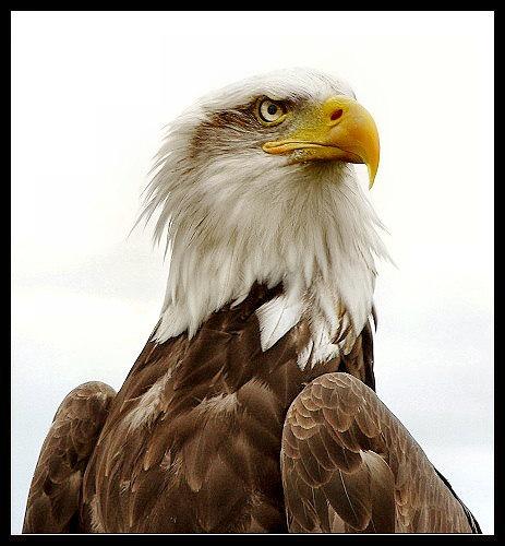 Hawk Eye by kjs