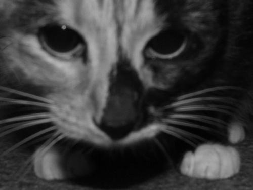 cat by iainpb