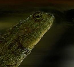 Graden Lizard - Try 1