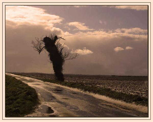 Tree Alone by Jimbob