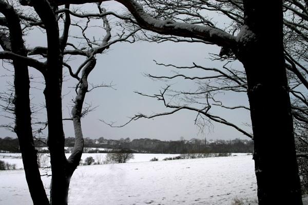 Snow in Essex!?! by NickCoker