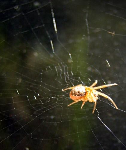 Garden Spider by sbeck