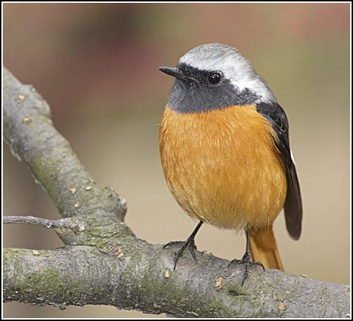 Robin? by leead
