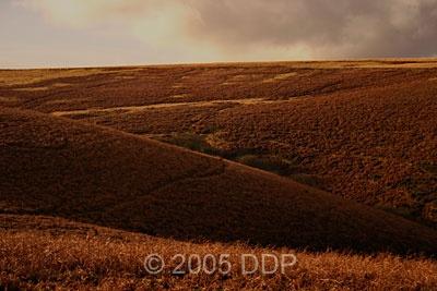 Dartmoor bracken by davidc