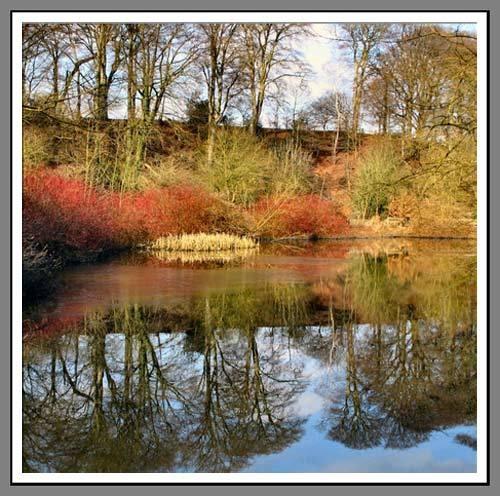 Reflection of a Season by evap