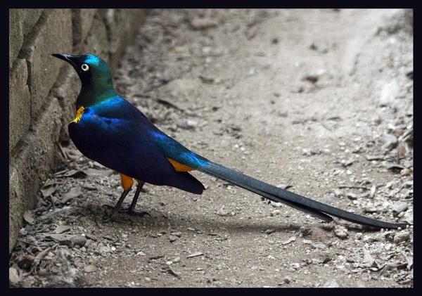 Bird ..... by shidee