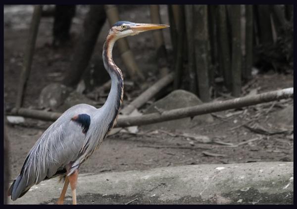 Bird....2 by shidee