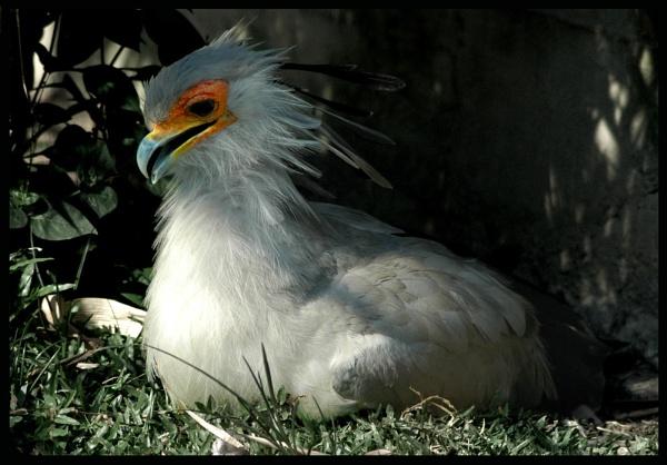 Bird....3 by shidee