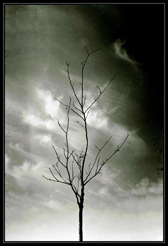Mourning Nature by elikag