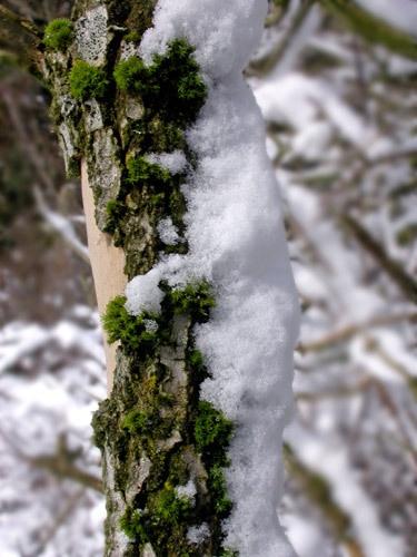 Frozen tree by NorahF