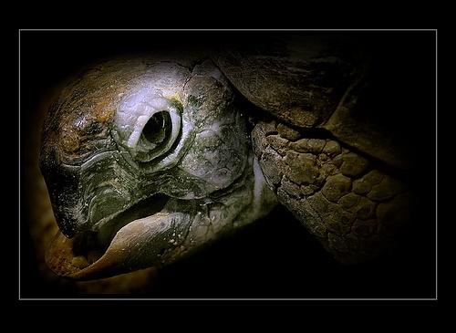 Dragon\'s eye. by evropan