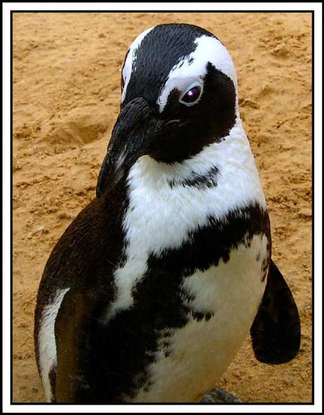 Penguin by Jimbob