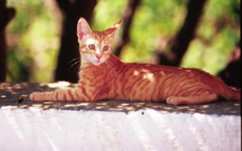 Cat by kombizz