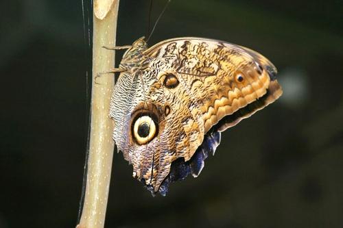Butterfly by saramalik