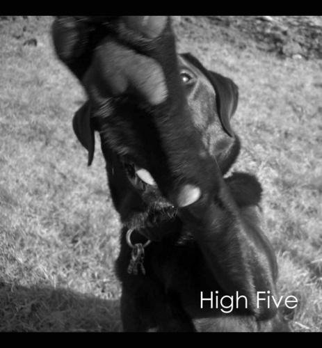 High Five by Kodak_Kid