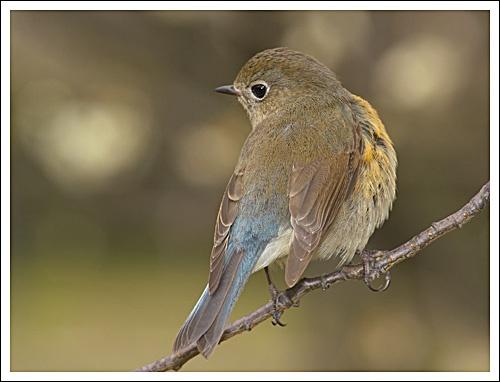 a bird by leead