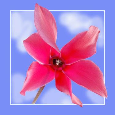 Pretty in Pink by deavilin