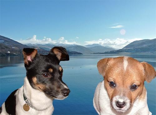Reservoir Dogs by sandrish