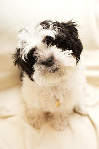 Boo pup by ventmonkey