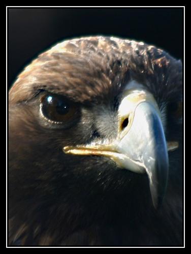 Eagle Eye II by liparig