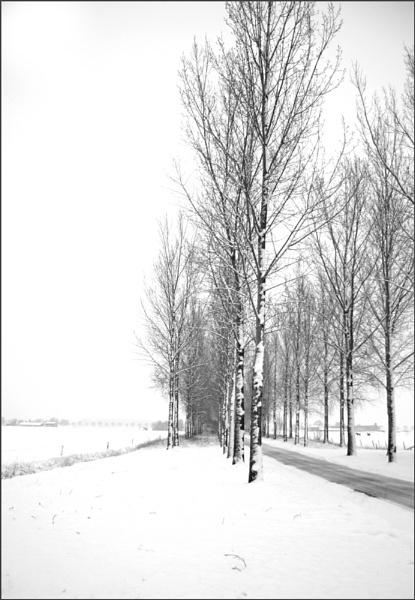 Road Three by conrad