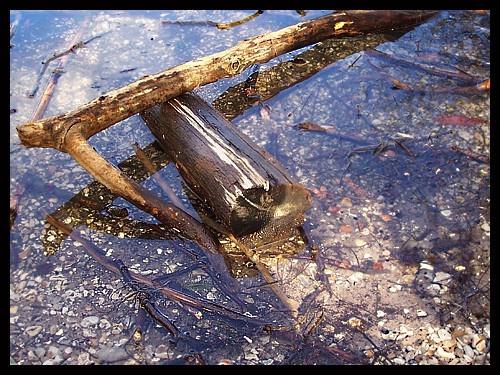 Driftwood by jennywren