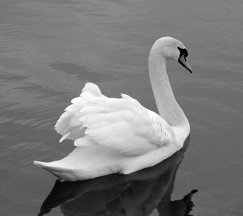 Swan Lake by Stevie_G