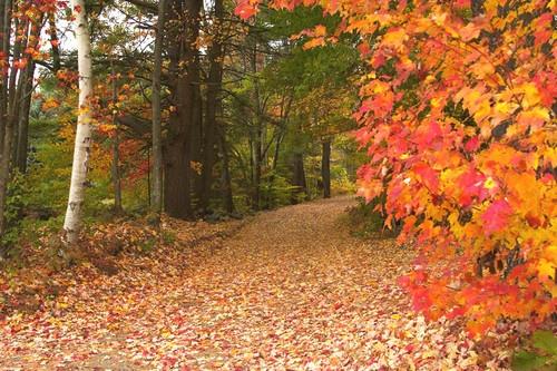 Colours of Fall by saramalik