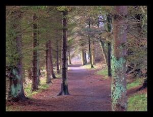 Woodland Walk by ScottRobertson