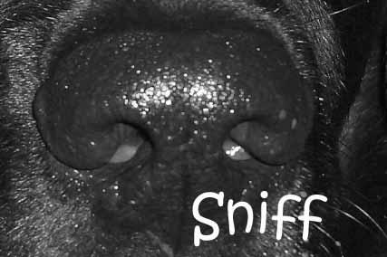 Sniff by Kodak_Kid