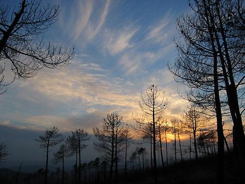 Burnt tree sunset by Redbarron