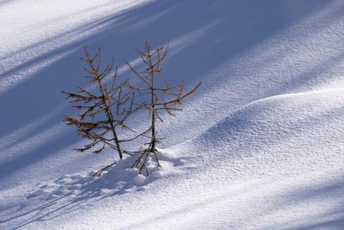 Snowbound by John-LS