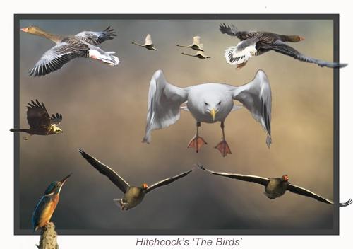 The Bird\'s by IanA