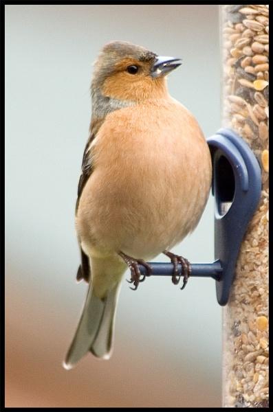 Another Garden Bird by mttmwilson