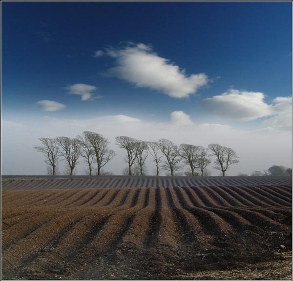 More fields #1 by scragend