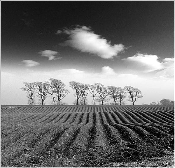 More fields #2 by scragend