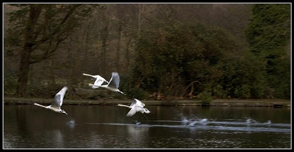Flight by AdrianTurner