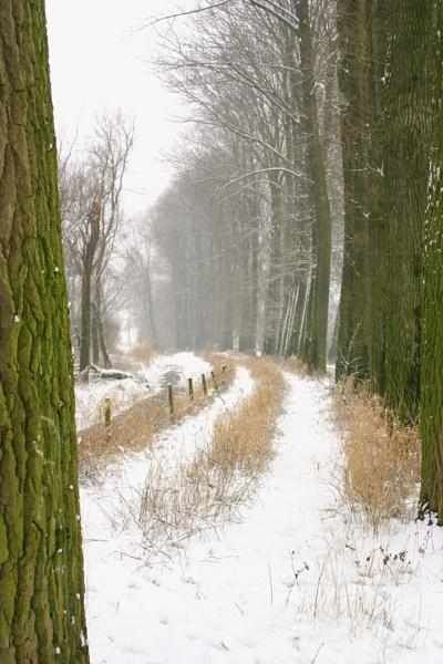 Snowy Trail by conrad